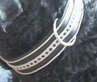 hundhalsband-pa-hund